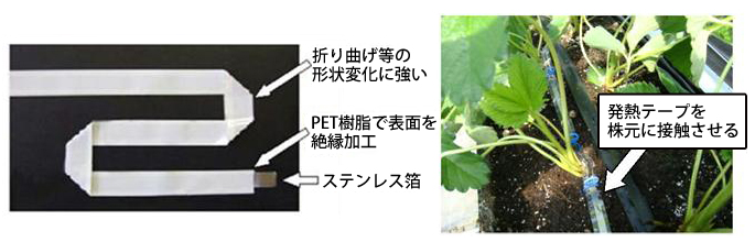 クラウン(株元)部の局所加温用テープヒータ